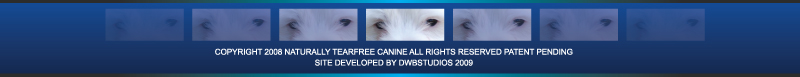 Remove Dog Tear Stains Organically